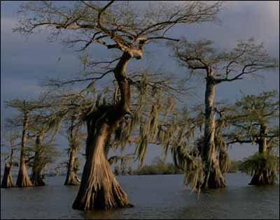 Болота Манчак в Луизиане