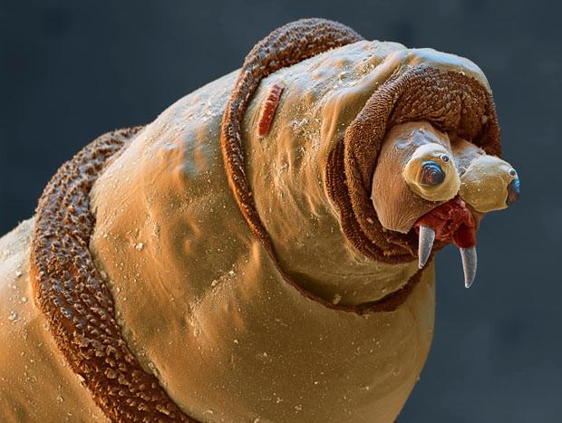 Насекомые под электронном микроскопом