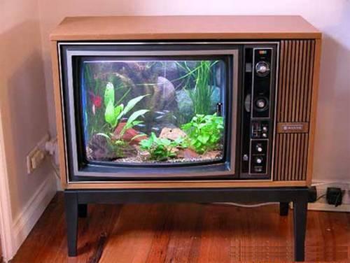 Аквариум телевизор